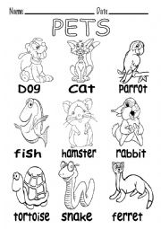 English Worksheets: B&W VOCABULARY ABOUT PETS