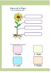 math worksheet : english worksheets parts of a plant : Parts Of A Plant Worksheet Kindergarten
