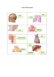 English Worksheet: Internal Body Organs 1