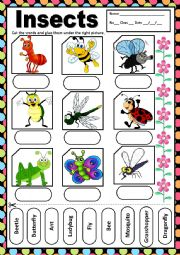 English Worksheet: INSECTS - MATCHING
