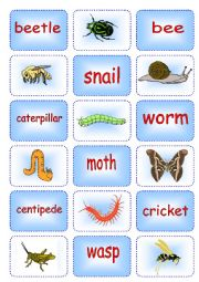 Creepy Crawly Matching Cards 1