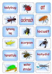 English Worksheet: Creepy Crawly Matching Cards 2