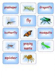 English Worksheet: Creepy Crawly Matching Cards 3