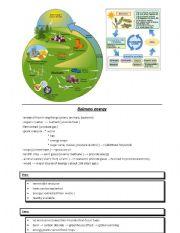 English Worksheet: biomass energy
