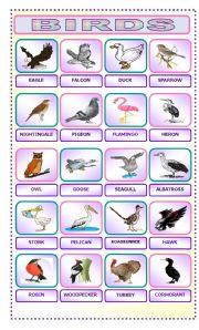 English Worksheet: BIRDS