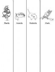 English Worksheet: Owl Food Chain