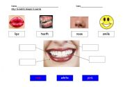 English Worksheets: Mouth and Teeth