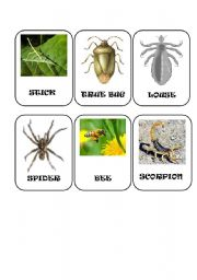 English Worksheets: Insect cards