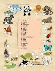 English Worksheets: Animals and insects
