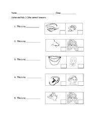 English Worksheets: My Body
