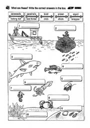 English Worksheets: sea creatures 2