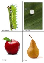 English Worksheet: The very hungry caterpillar flash-cards 1 of 2