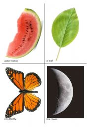 The very hungry caterpillar flash-cards 2 of  2