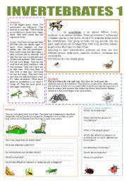English Worksheet: INVERTEBRATES 1
