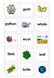 English worksheet: Pair picures