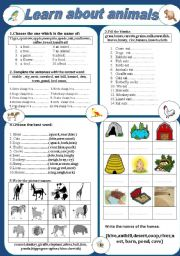 English Worksheets: Learn about animals
