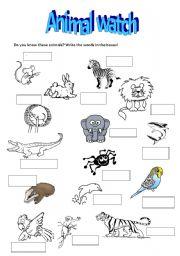 English Worksheets: Animal watch