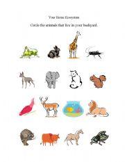English Worksheet: Your Backyard Ecosystem