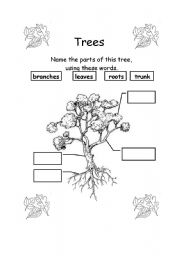 English Worksheet: Parts of a tree
