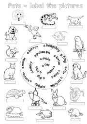 English Worksheet: Pets-label the pictures
