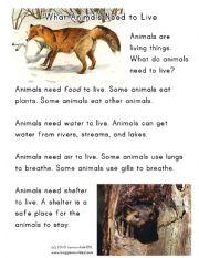 English Worksheets: Animal Needs