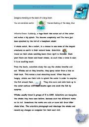 English Worksheet: whale watching