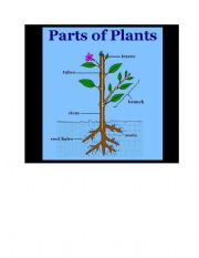 English Worksheet: Parts of plants