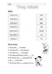 English Worksheets: Young Animals 2