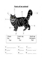 English Worksheet: Animal body parts.