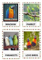 English Worksheet: BIRDS PART-I DOC.