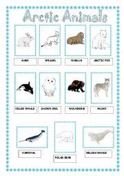 English Worksheet: Arcitic Animals