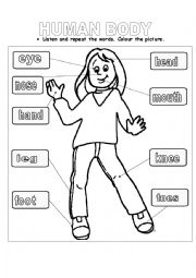 math worksheet : nail art systems  nail art : Human Body Worksheets For Kindergarten