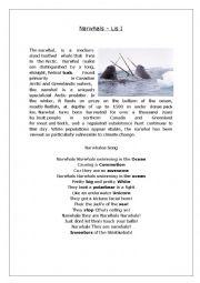 English worksheet: Begginer Listening - Norwals song