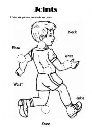 English worksheets: Science Joints