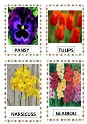 English Worksheet: FLOWERS PART-2