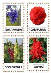 English Worksheet: FLOWERS PART-8