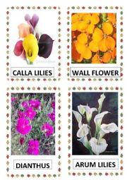 English Worksheet: FLOWERS PART-9