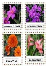 English Worksheet: FLOWERS PART-11