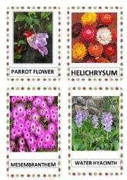 English Worksheet: FLOWERS PART-13