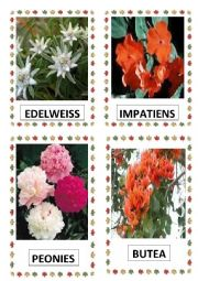 English Worksheet: FLOWERS PART-14