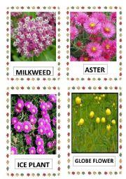 English Worksheet: FLOWERS PART-15