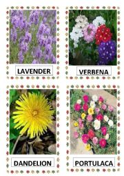 English Worksheet: FLOWERS PART-16
