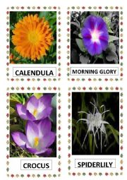 English Worksheet: FLOWERS PART-17