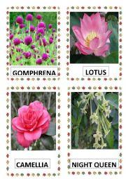 English Worksheet: FLOWERS PART-18