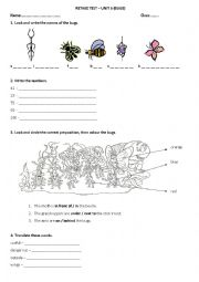 English Worksheets: English Adventure 3 Bugs Ttest