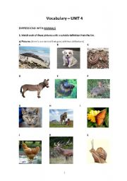 English Worksheets: Expressions with animals