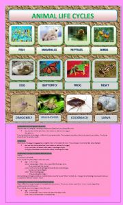 English Worksheet: ANIMAL LIFE CYCLE PART 1