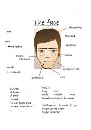 English Worksheets: the face - vocabulary