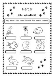 English Worksheets: Pets (2 pages)