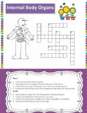 English Worksheet: Internal Body Organs Cross word